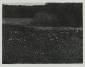 Risto Suomi*