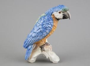Figuriini, Papukaija